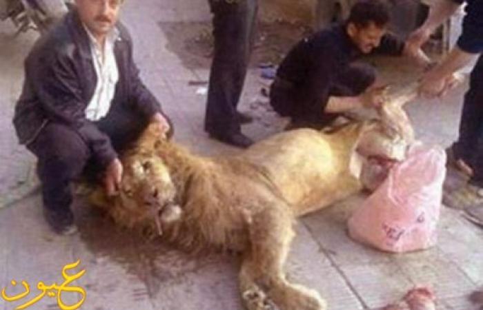 """سوريون يذبحون """"أسدًا"""" ويسلخونه بسبب الجوع!"""