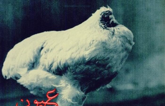 قصة دجاجة معجزة عاشت بدون رأس: ظلت حيّة 18 شهرًا بعد ذبحها