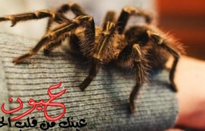 """""""Araceptropophobia"""" es una enfermedad de miedo a las arañas. La ansiedad y las náuseas son los síntomas más prominentes"""