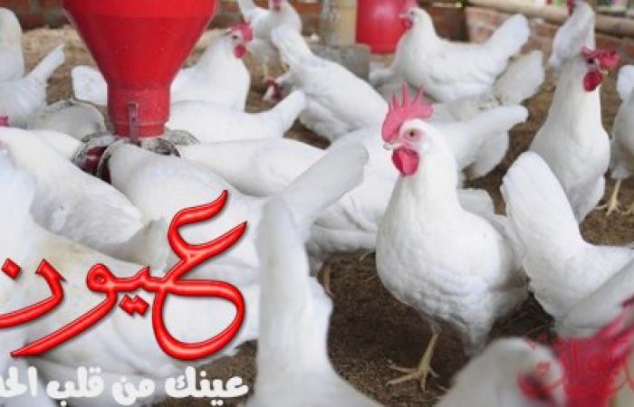 اسعار الدواجن اليوم الأحد 7 أبريل 2019 في مصر