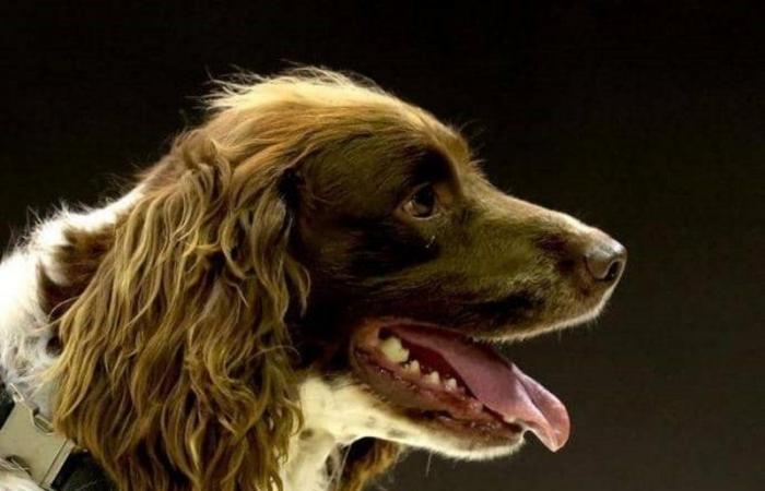 الأردن.. إصابة كلب بكورونا قُبيل سفره بالطائرة
