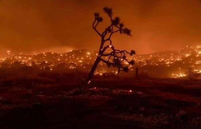 """الأسبوع في 6 صور: كرات النار تلتهم كاليفورنيا.. و""""سيلفي"""" اللاما والرجل"""