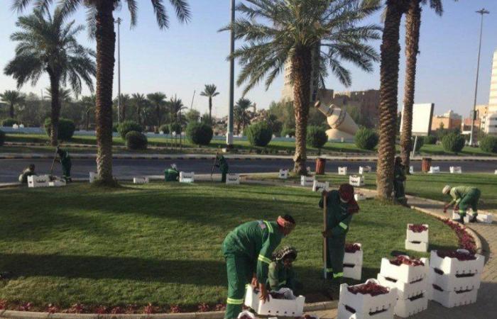 زراعة 35 ألف زهرة على طريق المسجد الحرام وميدان زمزم