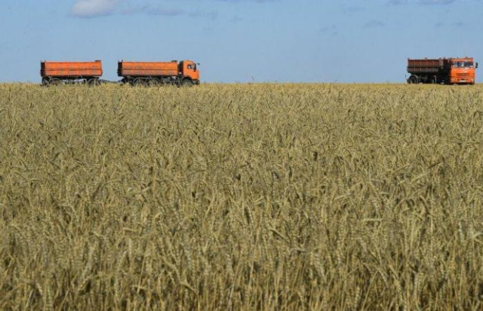 """""""سالك"""" تتعاقد على توريد 355 ألف طن من القمح من استثماراتها في الخارج"""