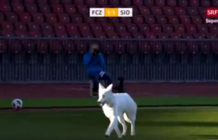 بالفيديو.. كلب يتسبب في إيقاف مباراة بالدوري السويدي