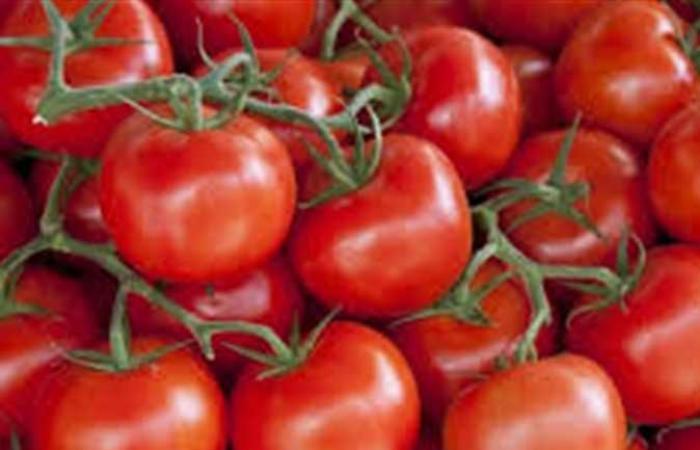 متحدث الزراعة: 50 ألف جنيه تكلفة فدان الطماطم