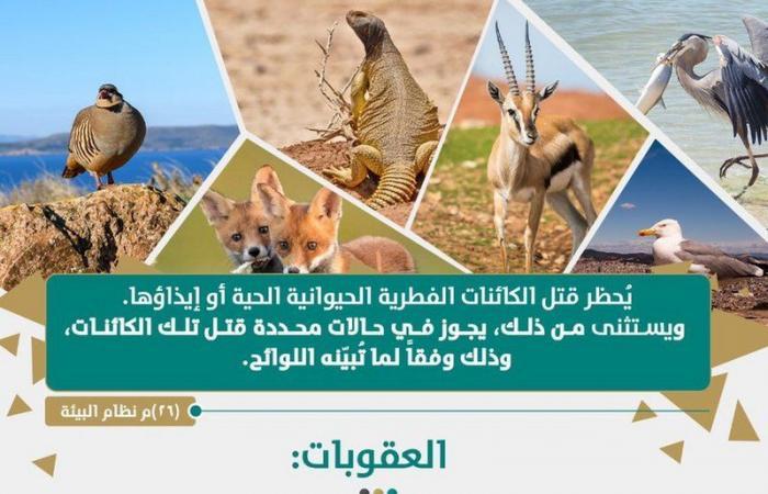 النيابة العامة: يحظر قتل الكائنات الفطرية الحيوانية الحية أو إيذاؤها.. وهذا هو الاستثناء الوحيد