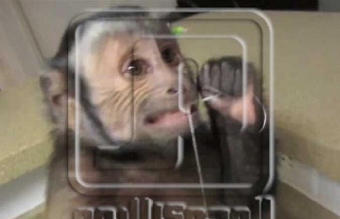 معدل الوفيات يصل لـ 80%.. تسجيل أول حالة وفاة بشرية لطبيب صيني بفيروس القرد PV