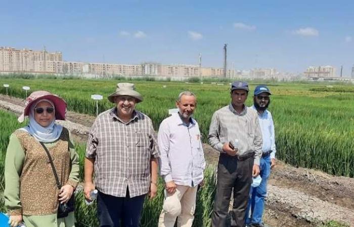 «الزراعة» تنظم يوم حقلي لاستعراض الأصناف الجديدة من الأرز والذرة لمواجهة مخاطر المناخ