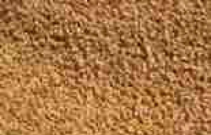 تجار: تونس تطرح مناقصة لشراء 67 ألف طن من القمح