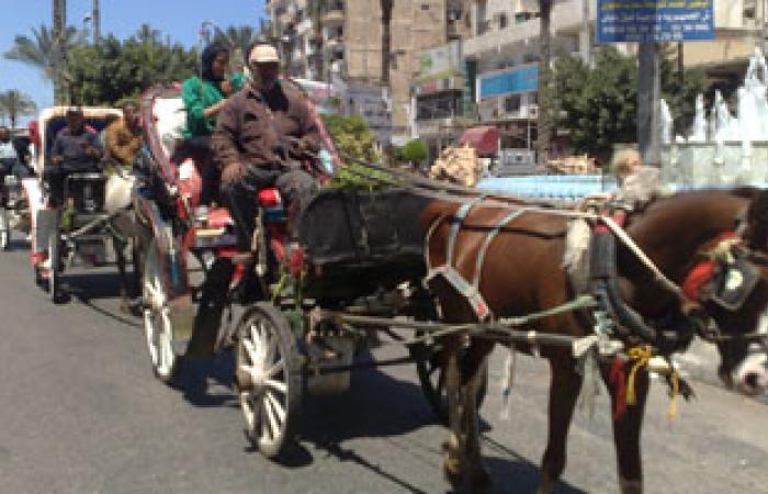 """أصحاب """"الحناطير"""" يقطعون كورنيش الأقصر احتجاجا على تحطيم عرباتهم"""