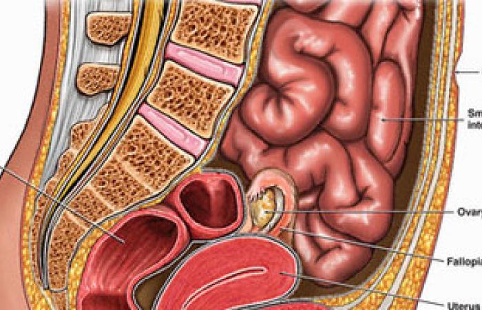 الأمعاء بها 10تريليونات خلية بكتيرية تضاعف الخلايا الموجودة بالجسم