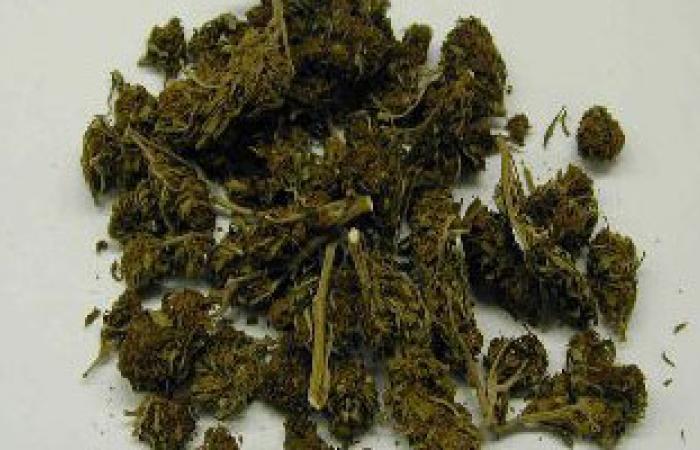 اكتشاف مادة بمخدر الماريجوانا تحد من تلف خلايا المخ