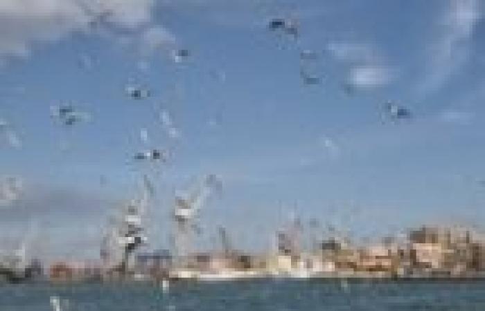 """هولندا تدعو أعضاء أمانة مشروع """"محور قناة السويس"""" لزيارة أكبر ميناء أوروبي"""