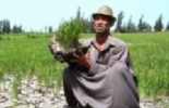 الفلاحون يهجرون «الغيطان» ويقطعون الطرق بسبب نقص مياه الرى