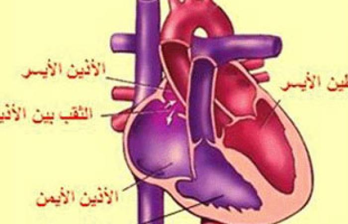 متابعة الطبيب بشكل دورى وإنقاص الوزن من أهم طرق علاج مرض عضلة القلب