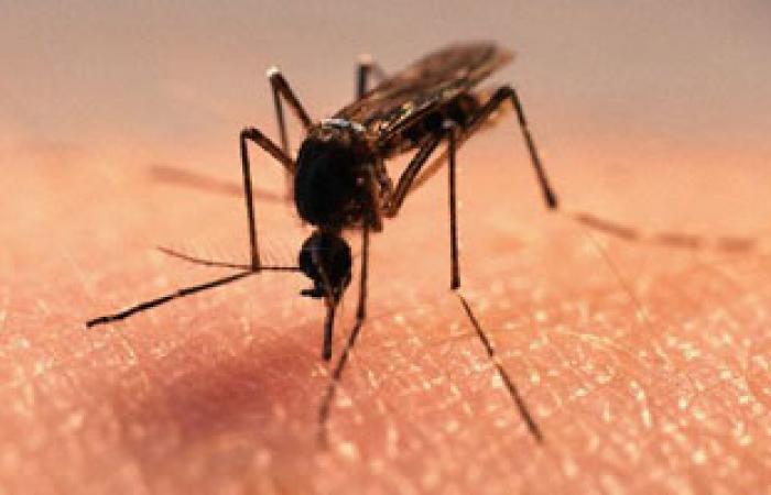 تحذير من الأمراض التى ينقلها البعوض