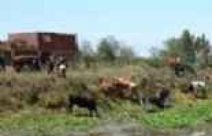 مواتير شركة المياه تغرق قرية موشا بأسيوط