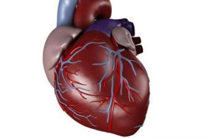 باحثون: تراكم الدهون حول البطن يؤدى للإصابة بأمراض القلب