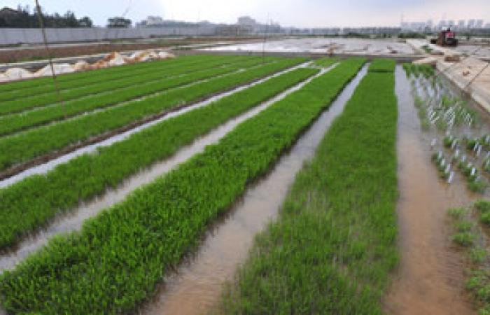 """""""الزراعة"""": تطبيق مشروع الرى الحقلى فى 9 محافظات العام المقبل"""