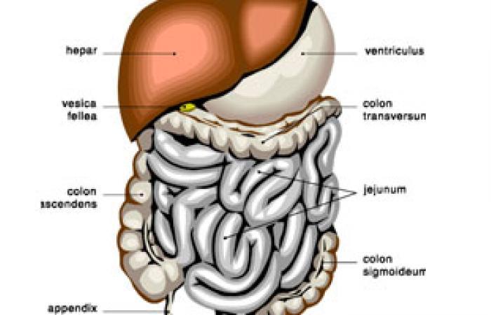 3 أسباب وراء الإصابة بالتهابات البنكرياس