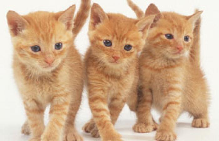 احذرى الكلاب والقطط فى منزلك فقد تسبب لك التينيا