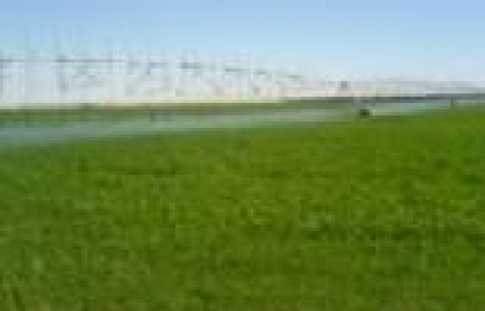 في ذكرى ثورة يوليو.. فلاحو المنيا يطالبون بالحفاظ على أراضي الإصلاح الزراعي