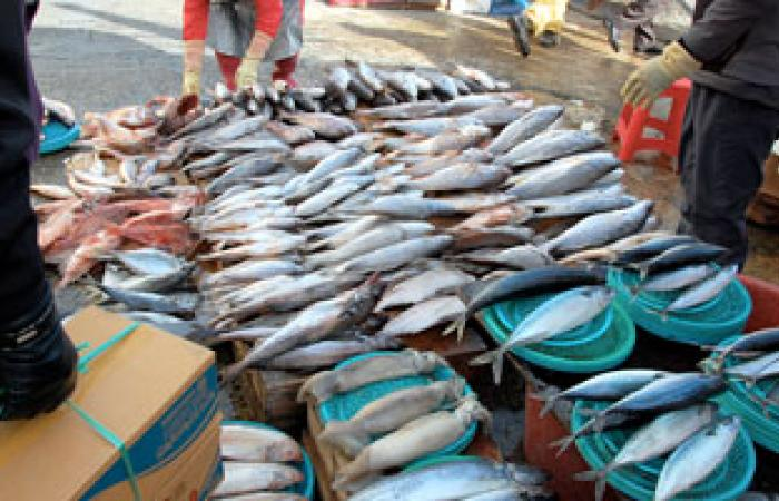 """كفر الشيخ: ارتفاع بأسعار الأسماك لغلق """"بورصة الأسماك"""" وتلف مئات الأطنان"""