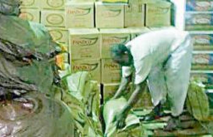 خيرية عجلان توزع 1400 سلة غذائية على المحتاجين