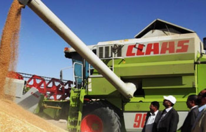 تجار: السعودية تطرح مناقصة لشراء 660 ألف طن من القمح الصلد