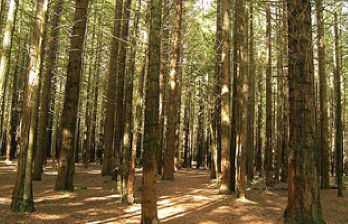 دراسة: تقطيع الأخشاب بالغابة يضاعف إفراز هرمون الذكورة بنسبة 15% أكثر من الرياضة