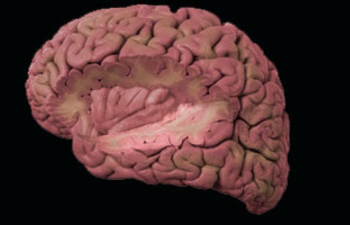 """تقارير: """"ألعاب الفيديو"""" تساهم فى تعزيز قوة المخ لدى كبار السن"""