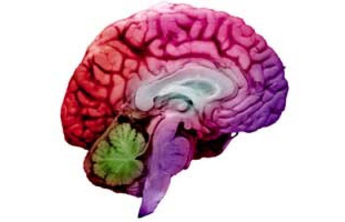 علاقة متبادلة بين الأمعاء والمخ بين عملية الهضم والوظائف الإدراكية