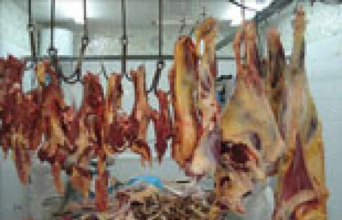 تراجع واردات اللحوم السودانية بنسبة 60%
