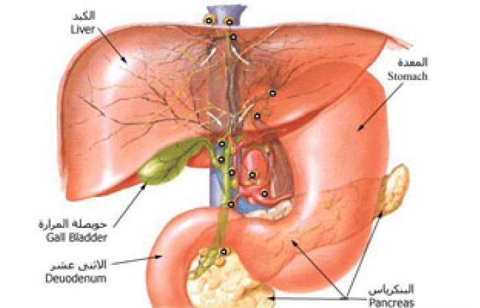 إنجاز ملموس فى التوصل لعلاج التهاب الكبد الوبائى