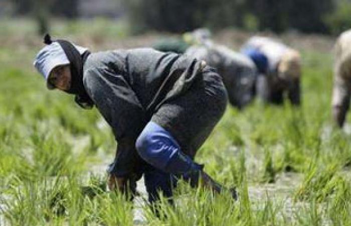 مسئول: زراعة السعودية أحدثت تغيراً بالبنية الاقتصادية
