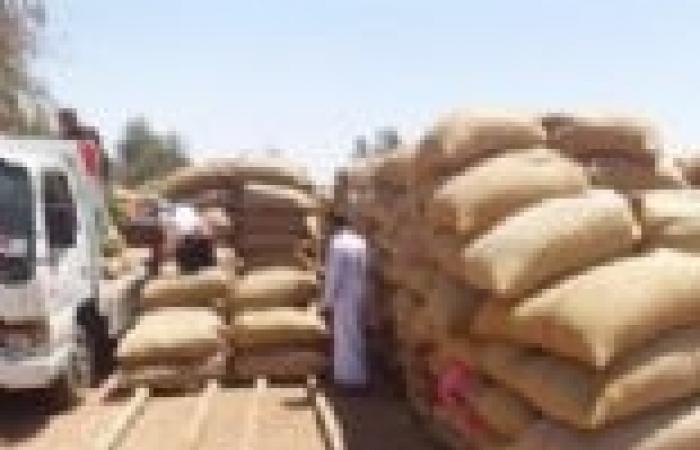 1700 طن قمح تتجه من ميناء الإسكندرية إلى قنا.. والهيئة: الصوامع تمتلئ بـ950 ألف طن