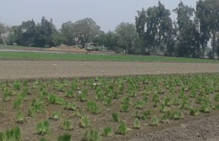 وكيل الزراعة بسوهاج: انتهاء تطهير الترع لمشروع تطوير الرى الحقلى