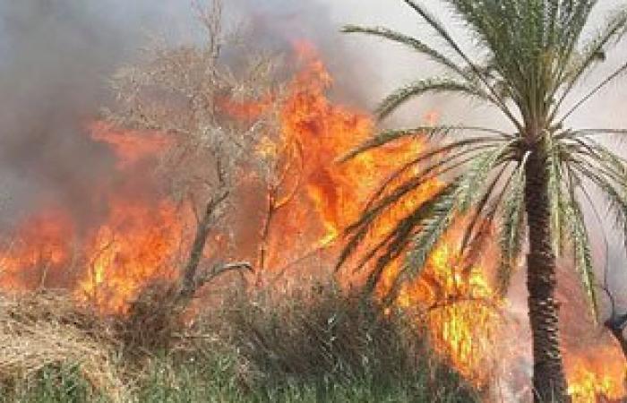حريق يلتهم 150 شجرة نخيل بإسنا جنوب الأقصر