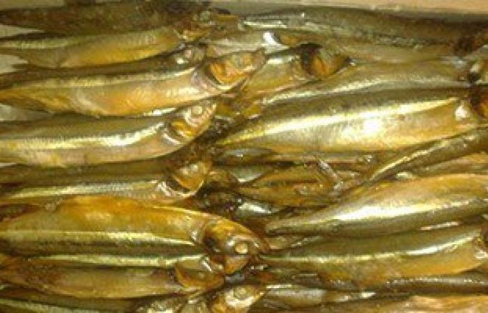 ضبط 530 كيلو من الأسماك المملحة غير الصالحة للاستهلاك الآدمى بالإسكندرية