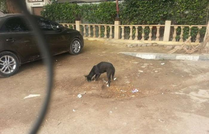 شاب يلتقط صورًا لكلب يدفن قطة نافقة فى المعادى