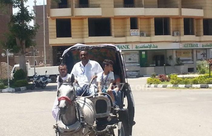 بالصور.. نهال عنبر تشارك فى ماراثون عربات الحنطور على كورنيش الأقصر