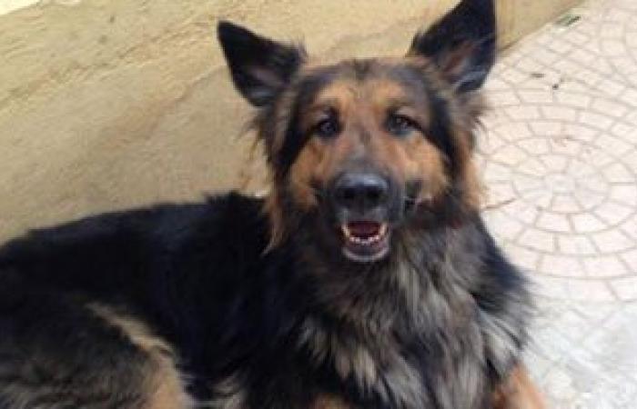 كلب مسعور يعقر 15 شخصا بمدينة جرجا فى سوهاج