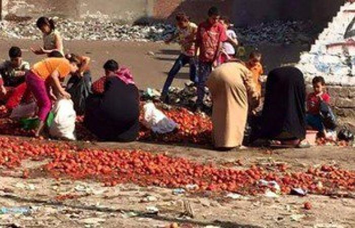 تداول صورة لمواطنين يجمعون الطماطم الفاسدة من مقلب قمامة بالمحلة
