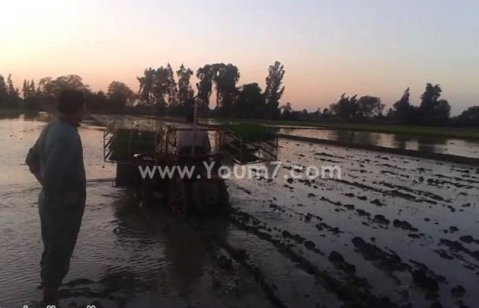 بالصور.. فلاحو الغربية ينتهون من زراعة محصول الأرز