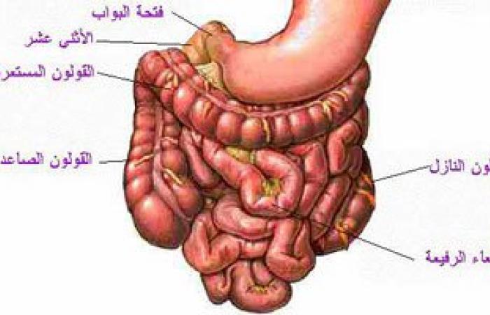 انتبه: إهمال علاج الديدان قد يؤدى لانسداد أمعائك
