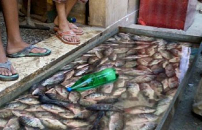 القابضة للصناعات الغذائية:توفير الأسماك على بطاقة التموين بـ7جنيهات للبلطى