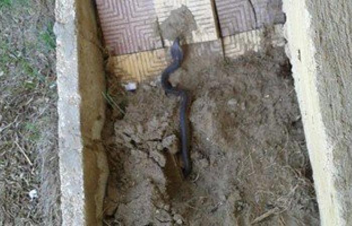 """بالصور.. إغلاق وحدة صحية فى مطوبس بكفر الشيخ بعد ظهور ثعابين """"كوبرا"""""""