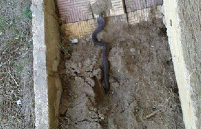 صحة كفر الشيخ ترفض إغلاق وحدة صحية بعد ظهور ثعابين كوبرا..وتؤكد: غير مؤذية