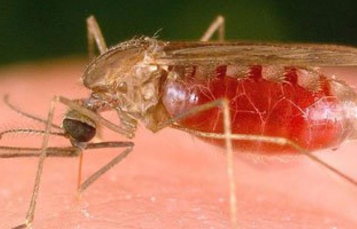 """""""نوفاريتس"""" توفر 300 مليون جرعة علاج ملاريا لأطفال أفريقيا"""